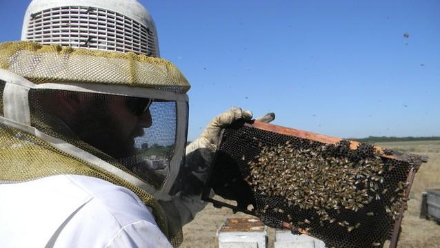 California Drought Dries Up Honey Supply