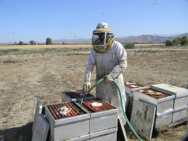 Beekeeper Angel Corona feeds the bees a sweet syrup to keep them from starving during the summer at Bradshaw Honey Farm. (Alice Daniel/KQED)