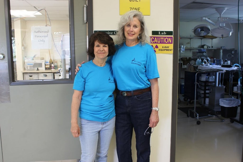 Karen Sheldon, left, a retired forensic scientist, has volunteered at International Bird Rescure for more than seven years. Martha Grimson, a semi-retired dental hygenist, has been there for 4 years. (Nora Elmeligy/KQED)