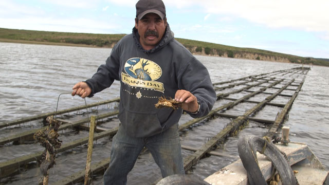 Jorge Mata has been working on the oyster farm for thirty years. (Jeremy Raff/KQED)