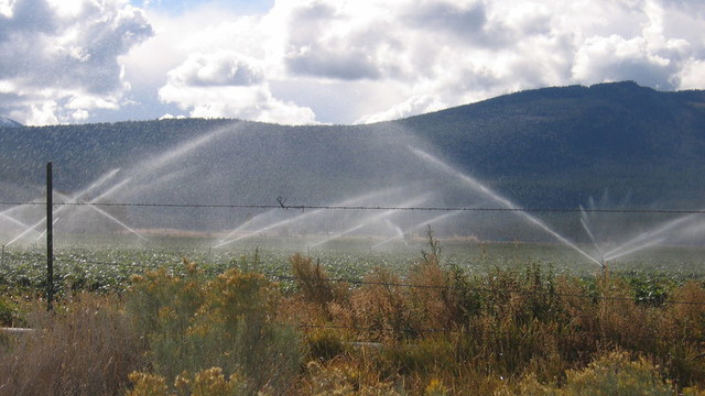 Crops being watered near Tule Lake in northern California. The Tulelake Irrigation District is one threatened with legal action by environmentalists. (Craig Miller/KQED)