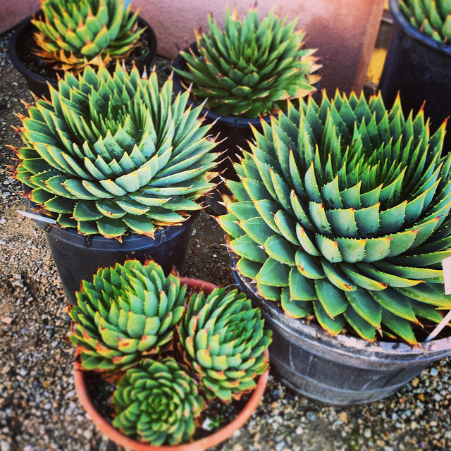 Gardening in the Drought: What Makes a Plant 'Drought