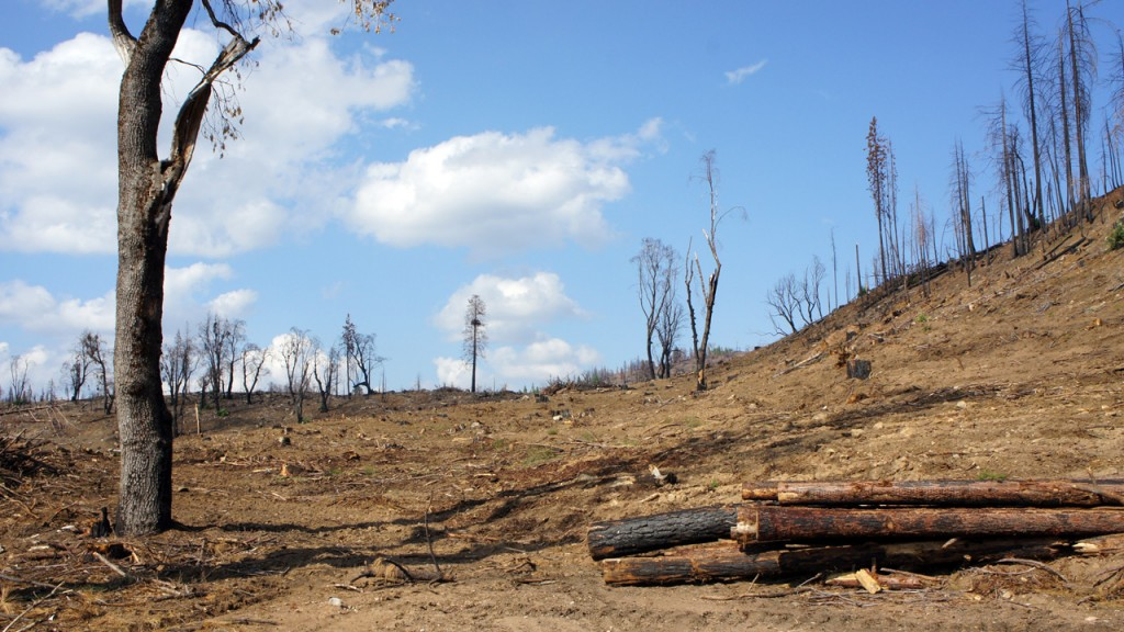 Sierra Pacific Industries began clearing its private land within weeks after the Rim Fire burned through.
