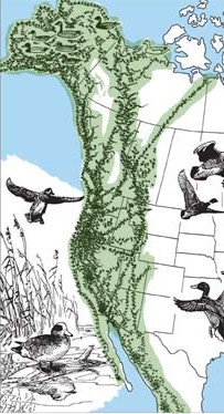 Hundreds of species of birds fly through San Francisco on the Pacific Flyway migration corridor. (U.S. Fish and Wildlife Service)