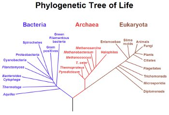 Bacteria and Archae are the two most ancient kingdoms on life's family tree. (Wikimedia Commons)