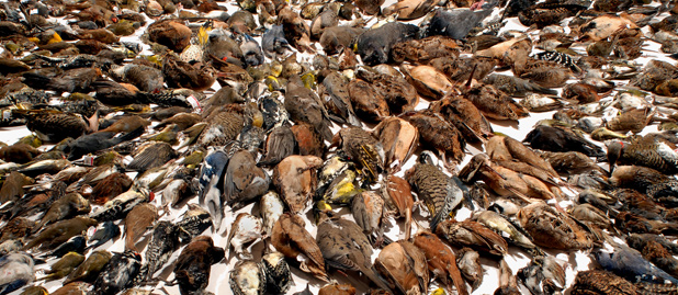 San Francisco Wants to Know: Is Your Living Room Window Killing Migratory Birds?