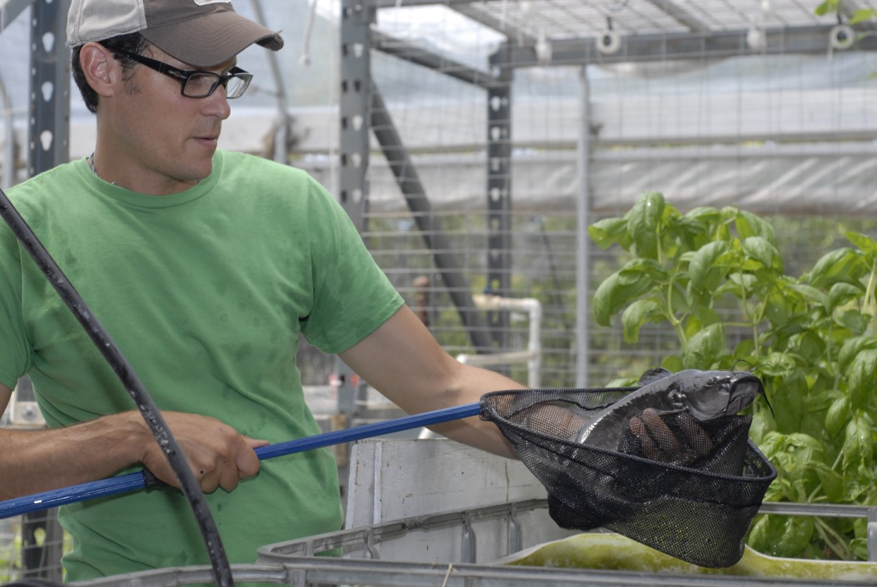 David Rosenstein's Los Angeles-based Evo Farm uses aquaponics, which combines hydroponics and fish farming. (Chris Richard/KQED)