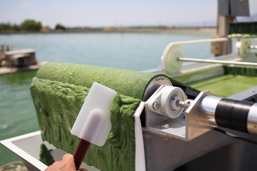 One of OriginOil's algae-skimming machines already is in use at a tilapia farm in the Mojave Desert community of Thermal. (Courtesy of OriginOil)