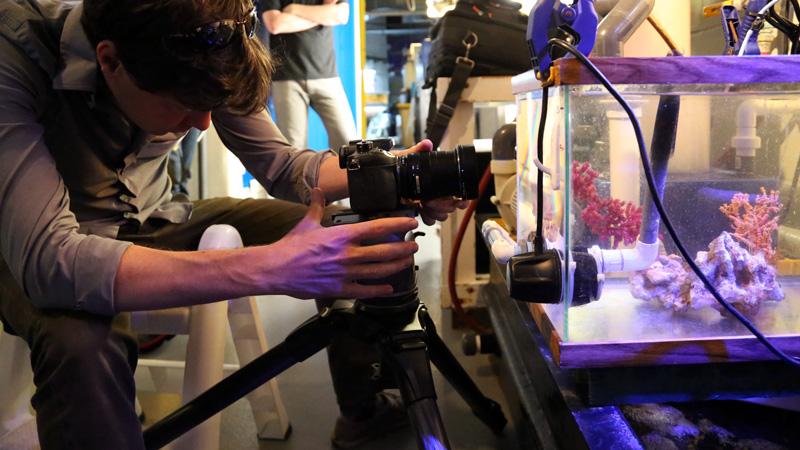 Josh Cassidy films pygmy seahorses