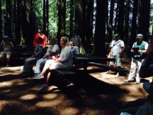 "Under the redwood canopy, naturalists hear the background about the ""Fern Watch"" project."