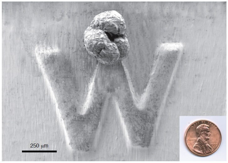 "A single foram sits on the ""W"" of a penny. (Mary McGann/USGS)"
