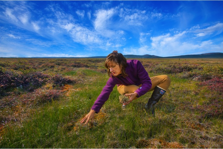 Susan Hubbard exploring the different types of Arctic vegetation