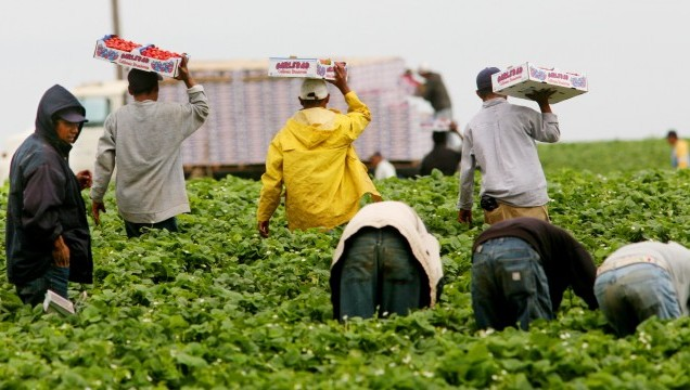 Chloropicrin was introduced to replace methyl bromide but has  negative health effects on workers so the California Department of Pesticide Regulation has introduced tighter regulations. (Sandy Huffaker/Getty Images)
