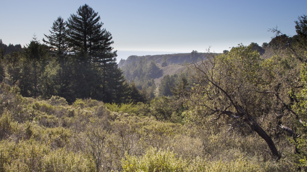 Conservationists are hoping to set aside nearly 6,000 acres for a Santa Cruz Redwoods National Monument.