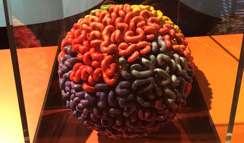 The human genome is packaged into a series of loops. This representation is from the Genome: Unlocking Life's Code exhibition, currently at The Tech Museum in San Jose. Each color represents a separate chromosome.