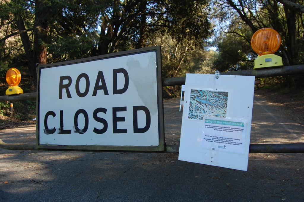 South Park Drive in Berkeley's Tilden Park is closed for the newts' breeding season every year (Gabriela Quiros/KQED)