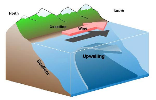 (Via wikimedia-modified by D. Reed from image by J. Wallace and S. Vogel, El Niño and Climate Prediction. Image courtesy of Sanctuary Quest 2002, NOAA/OER)  Upwelling happens when offshore winds push water away from the coast, and water from the deep comes up to replace the displaced surface water.