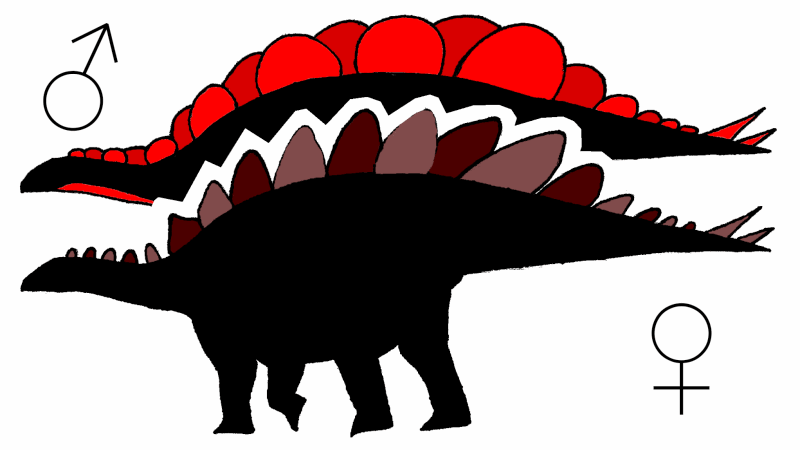 Male and female Stegosaurus