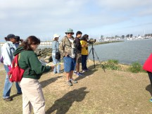 Recreational bird watchers contribute to the bird database on eBird which scientists then use. The Bird Safari last weekend at Crown Beach posted their list of birds to eBird. (Sharol Nelson-Embry)