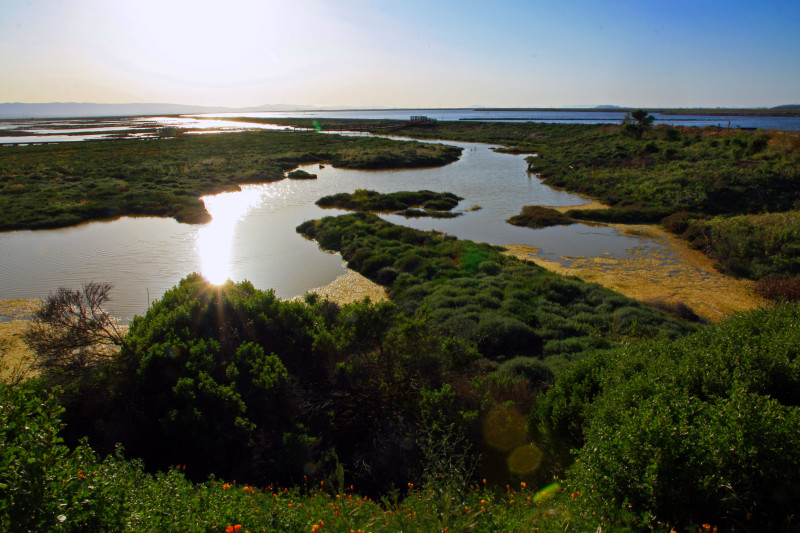 Walking through the tidal marshes at the Don Edwards SF Bay National Wildlife Refuge.