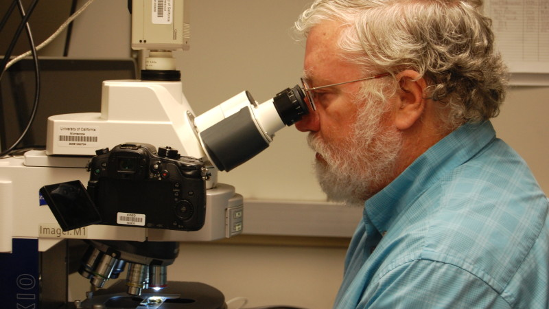 Brent Mishler examines a moss sample under the microscope at the University of California, Berkeley. He studies mosses that have the ability to live without water for decades and spring back to life when it rains.