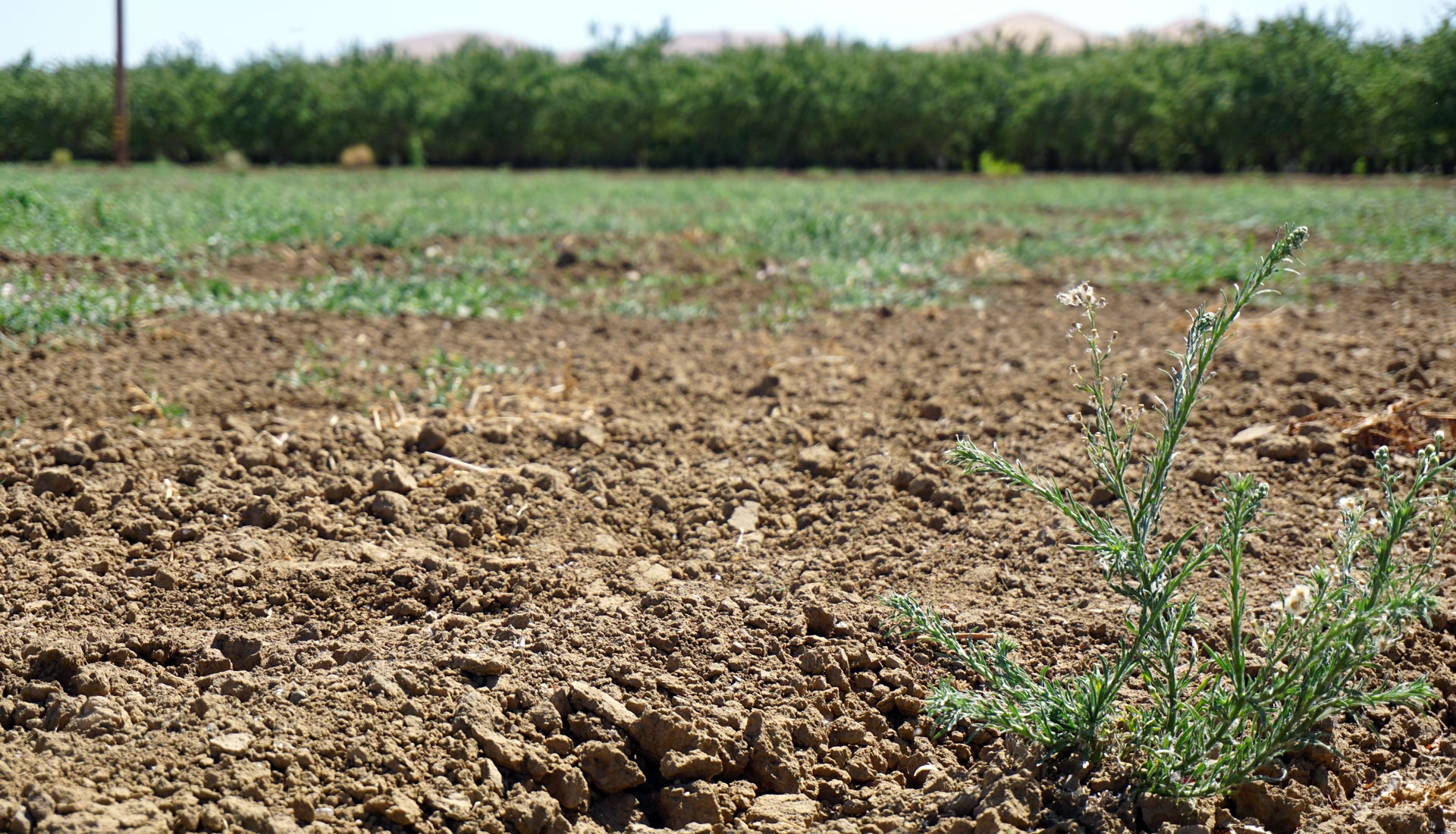 A quarter of farm fields in the Del Puerto Water District are fallowed this year.