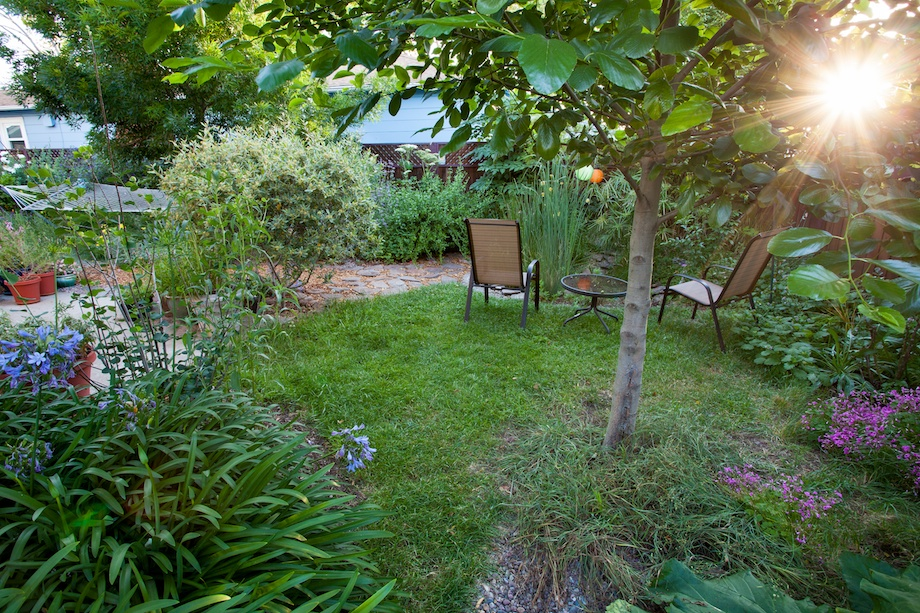 Converting your lawn to native plants can save money and for Grass looking bushes