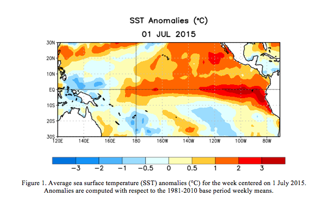 An El Nino forms when the usual easterly trade winds subside, allowing surface waters to warm along the equator.