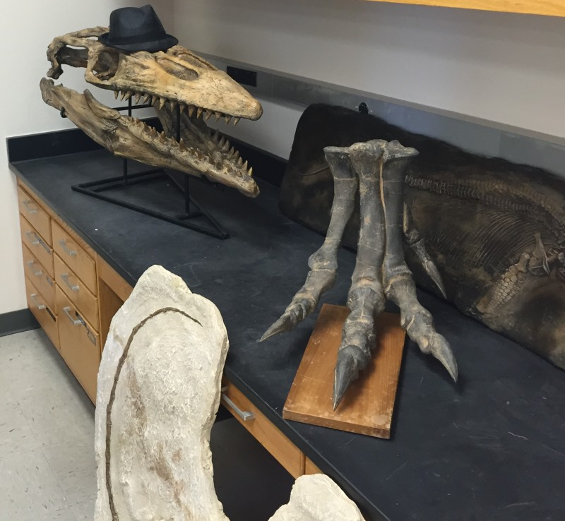 A relative to the present day Komodo dragon, the owner of this skull (left) sported flippers and could grow more than 20 feet long. To the right in Charles Marshall's lab sits an Allosaurus foot.