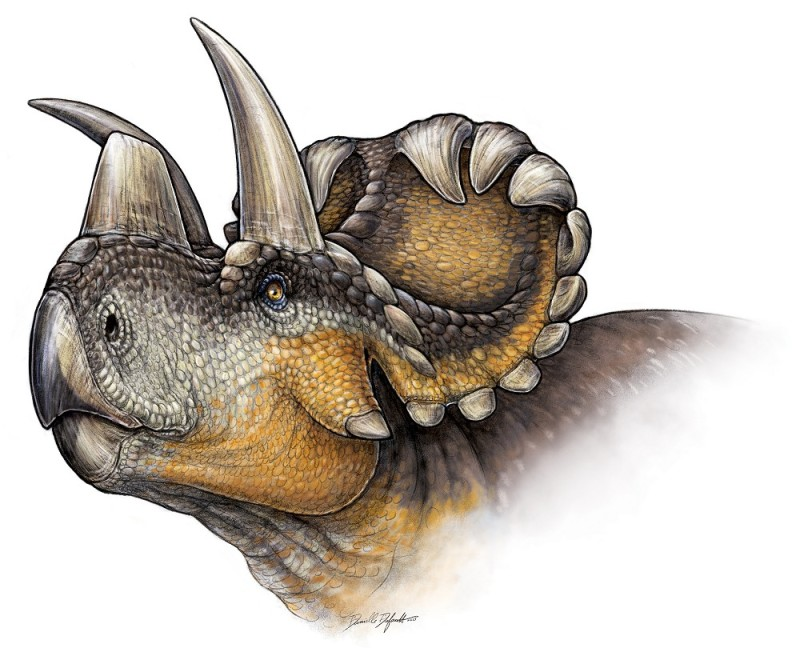 Head of Wendiceratops