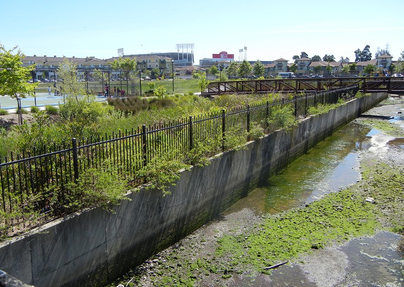 Plants Really Do Clean Pollution From Stormwater