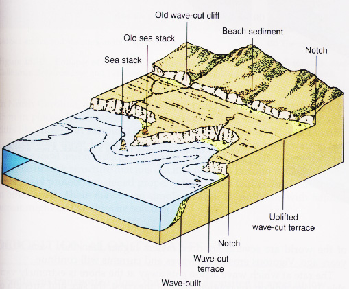 A visual representation of marine terrace formation.