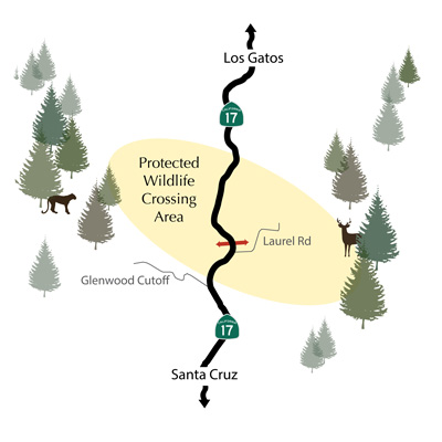 Situated two miles from the summit of Highway 17, a survey of all the available places to build a tunnel showed that Laurel Curve has the most animals trying to cross the highway.