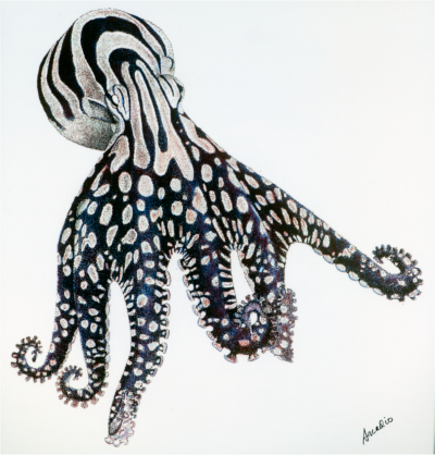 A painting by Rodaniche of the larger Pacific striped octopus.