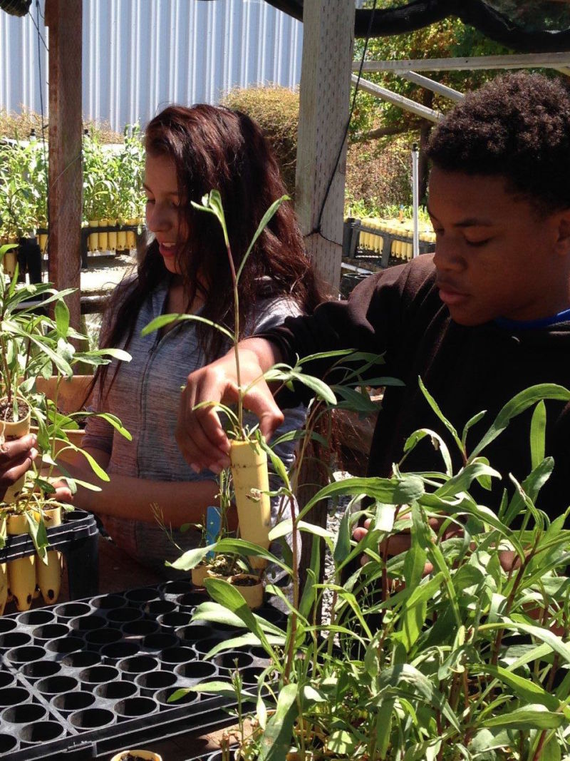 """Teen volunteers from EBRPD's """"Teen EcoAction"""" lend a hand transplanting native marsh plants at Save the Bay's nursery in Oakland."""