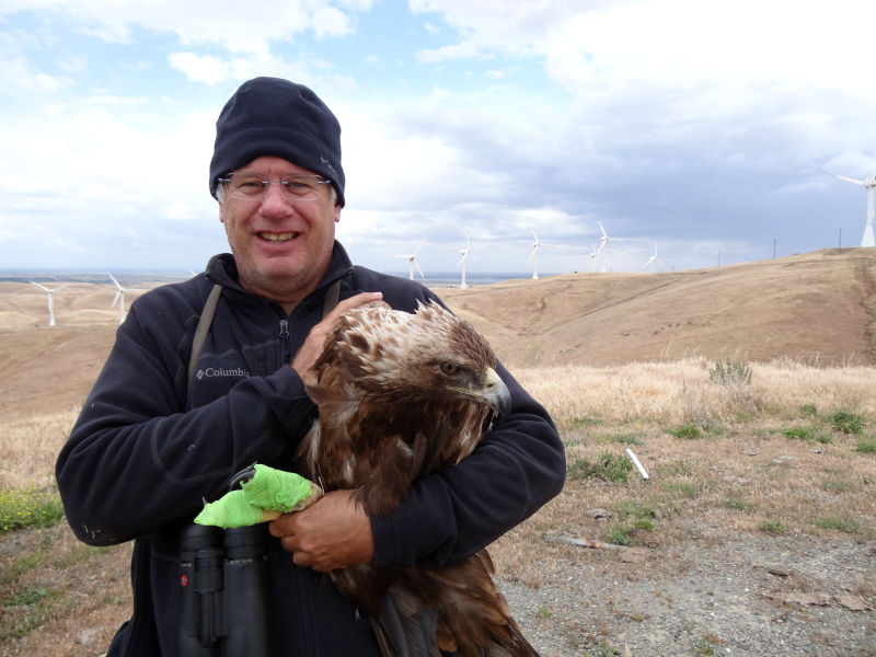 Ecologist Shawn Smallwood holds a golden eagle found injured in the Altamont Pass.