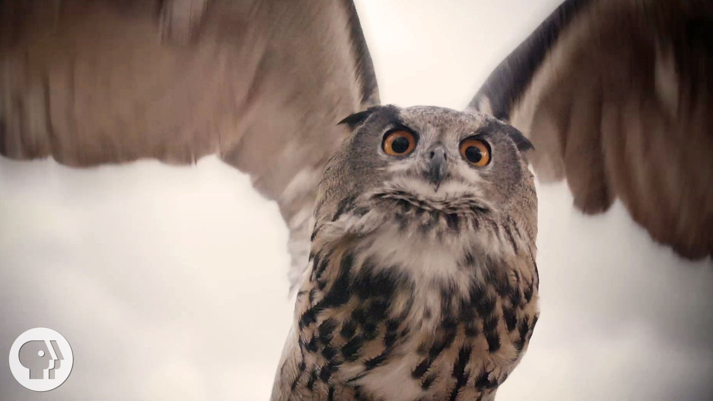 See What Makes Owls So Quiet and So Deadly