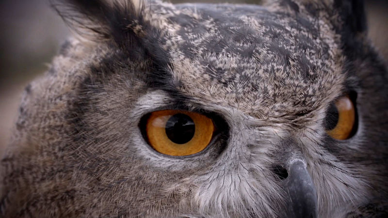 Owls are ambush predators, relying on stealth to catch their prey