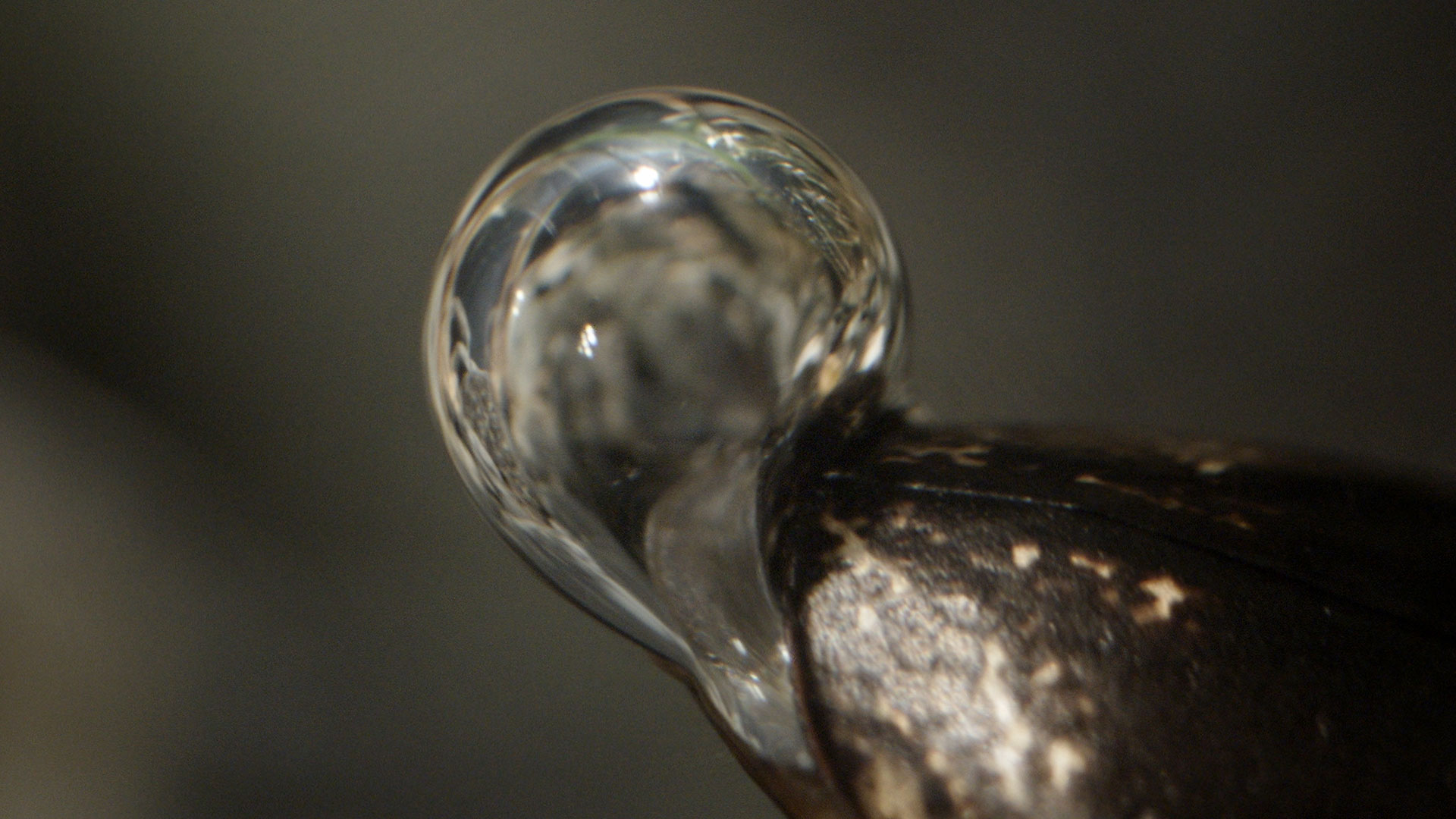 The beetle's bubble can partially replenish with oxygen from the surrounding water.