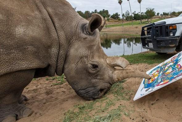 One of Last 4 White Rhinos Euthanized at San Diego Zoo