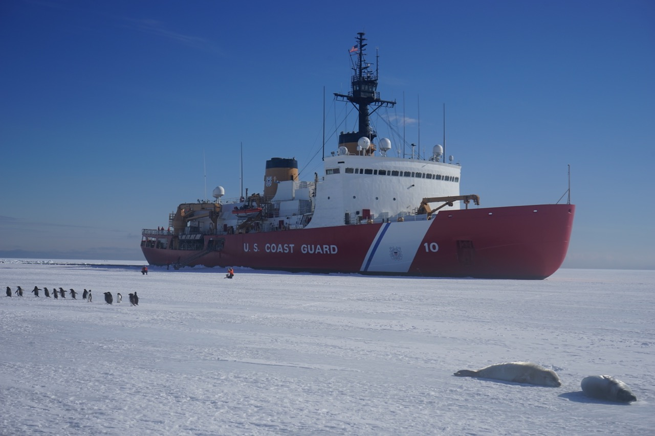 Antarctic wildlife turns out to greet Polar Star when she reaches the pack ice.