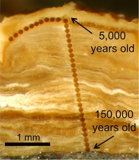 Magnified photograph of a cross-section through a 3 mm-thick rock soil deposit from Wyoming.