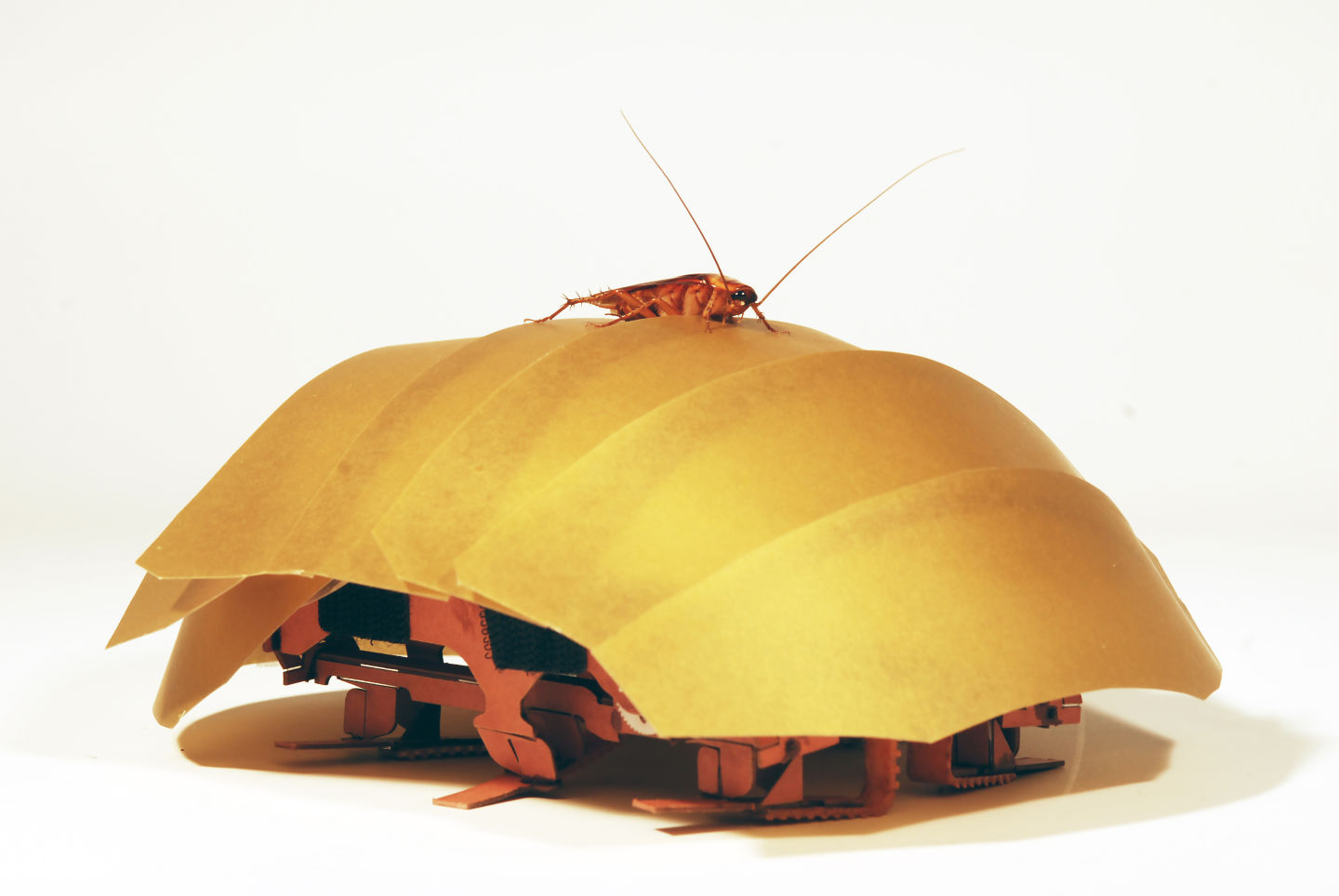 Cockroach Robot Could Come to Your Rescue