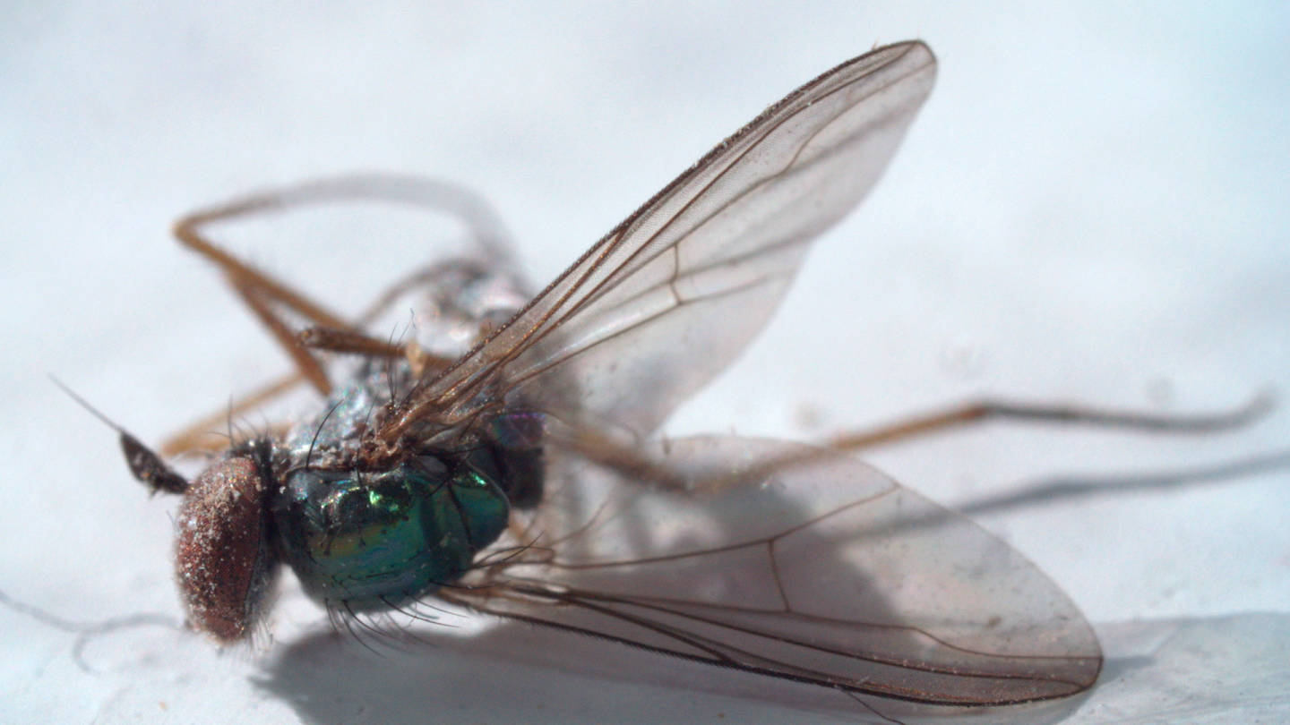 Flies (Diptera) made up about 25% of the types of arthropods found in the homes sampled