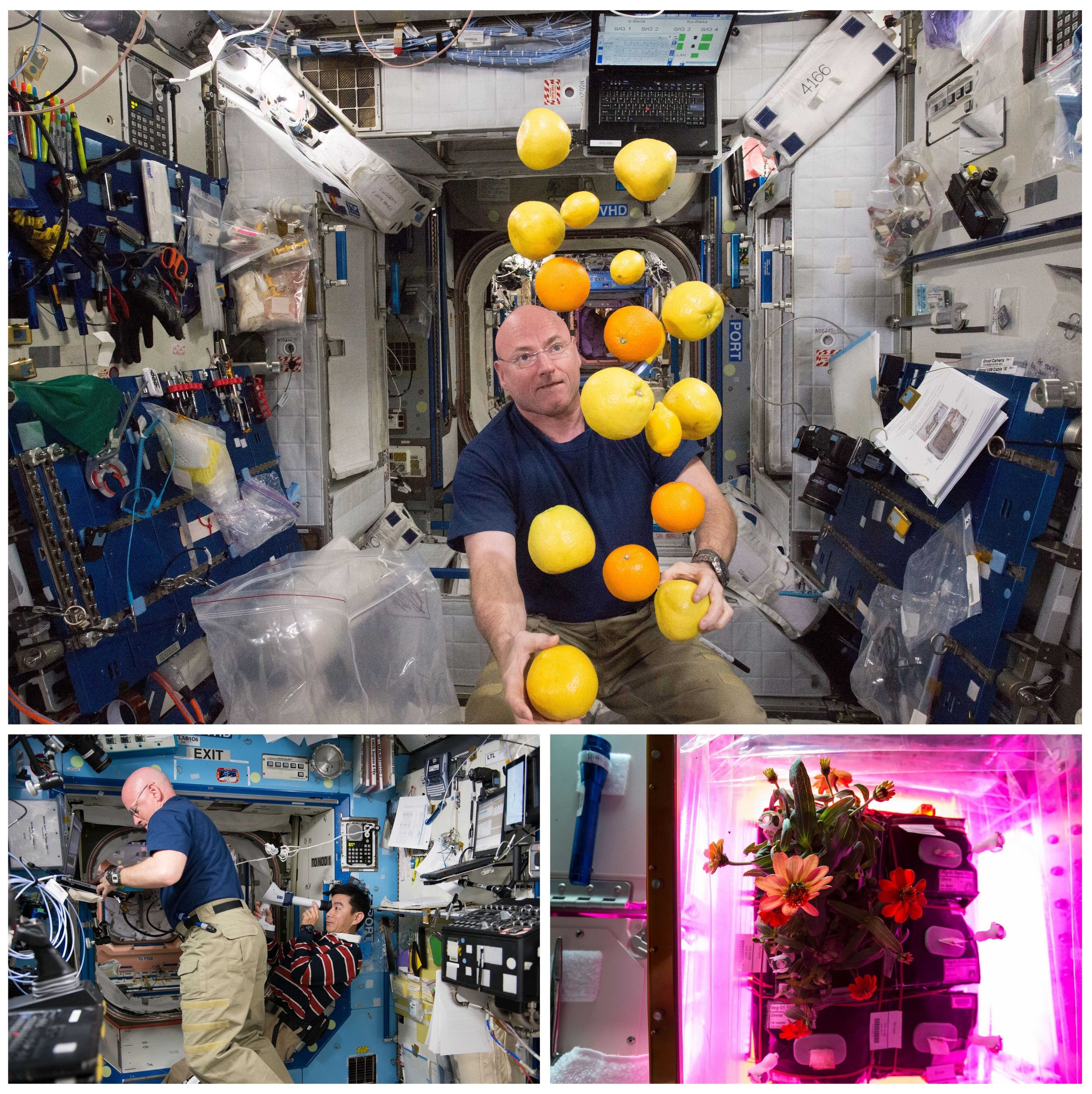(Top) Kelly corrals a supply of fresh fruit that arrived on a Japanese cargo ship on Aug. 25. (Bottom left) Kelly assisted with numerous studies to see how prolonged spaceflight affects vision and other aspects of human health. The results of those tests won't be available for another year or so. (Bottom right) The crew also grew crops in zero gravity, including these zinnias.
