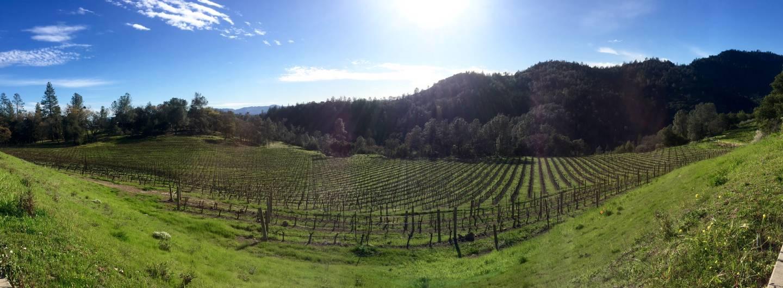 Sonoma County vineyard.  Lindsey Hoshaw/KQED