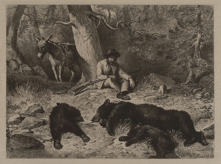 The Gold Rush and repeating rifle proved to be the undoing of the California Grizzly. By the mid 1920s, they had been trapped and hunted into extinction.