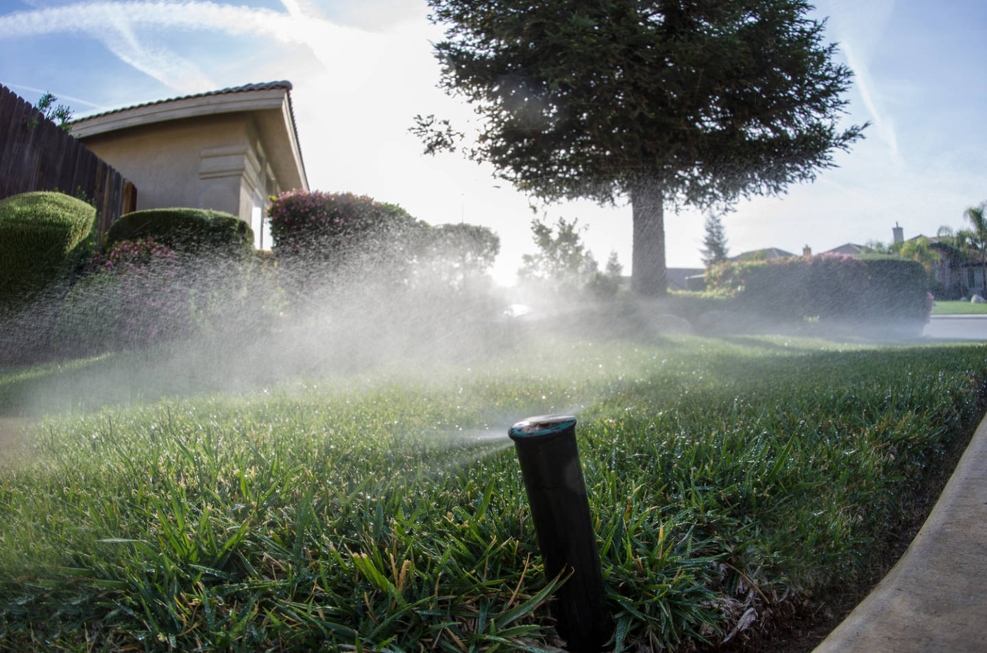 Sprinklers on a Bakersfield lawn. The city saved 17.7 percent in February compared to February 2013. John Chacon/California Department of Water Resources