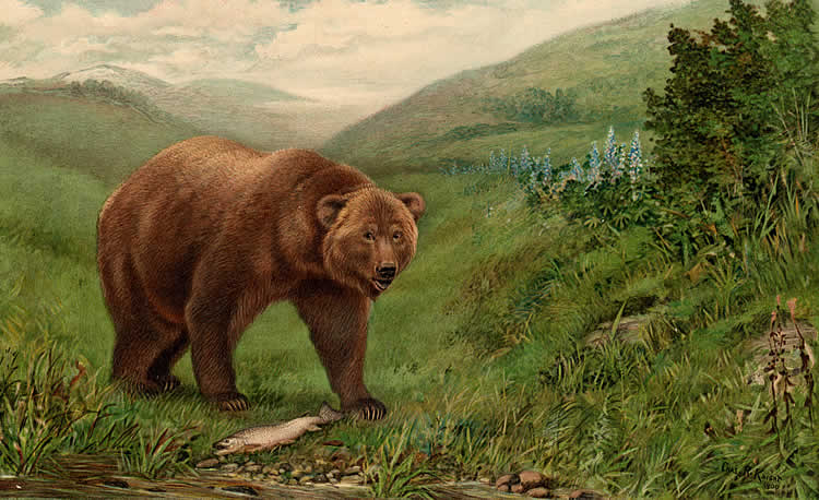 Biologists estimate that there were about 10,000 grizzlies in California before the Gold Rush.