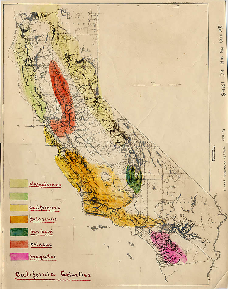C. Hart Merriam's hand-colored map shows grizzlies in widely varied habitats across California. He also identified several subspecies.